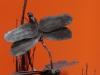 dsm-beelden-7a-libelles
